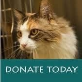 cats-donate-today-1