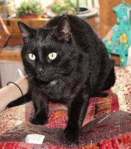 cats-reggie-2-1