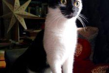 cats-wispa-new-home-1