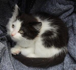 kittens-buster-1