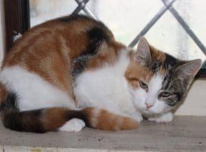 kittens-suzy-2-1