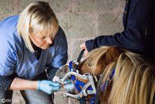 ponies-dentist-1
