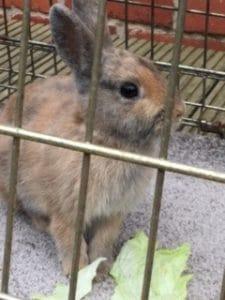 rabbit-found-1