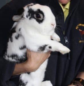 rabbit-hector-3-1