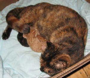 18-8-07-topsys-kittens-003