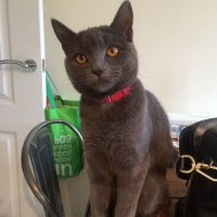 Dakota Lost Cat Derbyshire