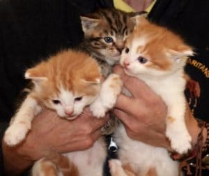 kittens-demelzas-2-1