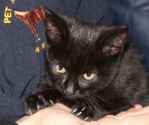 kittens-toffee-2-1