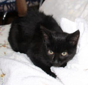 kittens-toffee-3-1