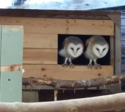 owls hansel and gretel pet samaritans