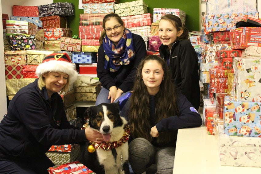 Homeless Shoebox Appeal for Pets
