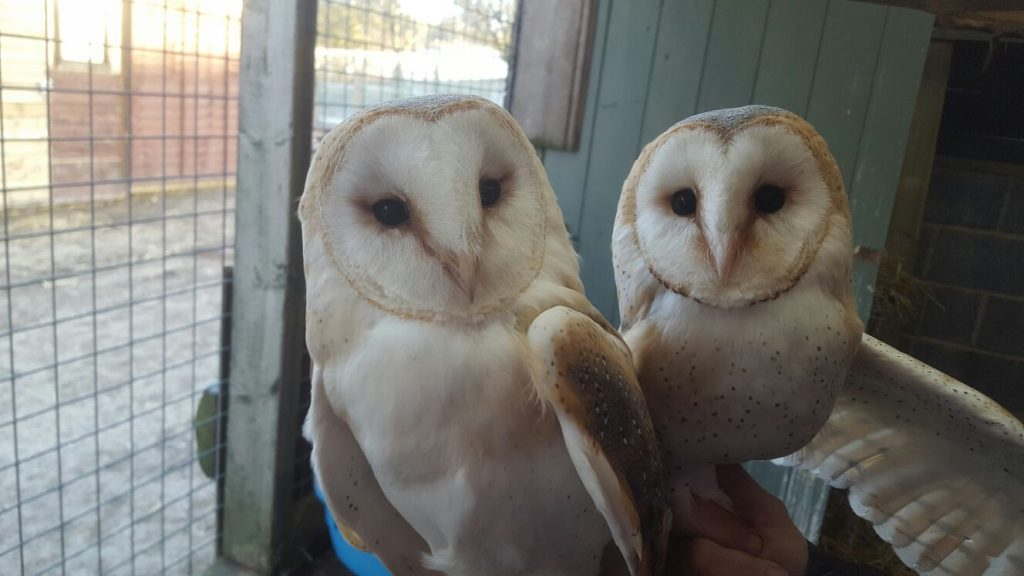Animal Sanctuary Owls