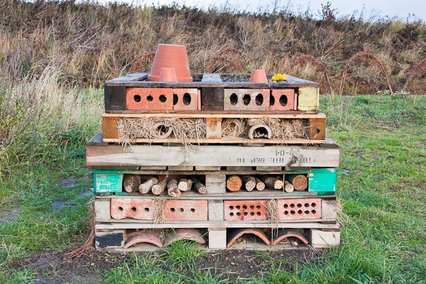 Simple bug house for insects