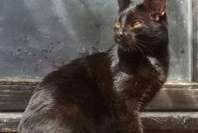 Amber Cat adoption