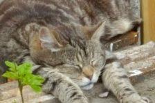 cat101