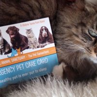 Emergency Pet Rescue for Terminally Ill Owners and Bereavements