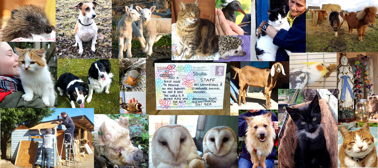 Animal Sanctuary Life
