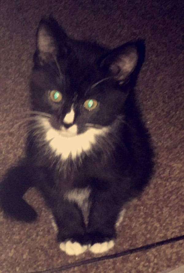 Lost Cat Missing 30th April 2017