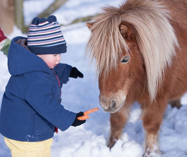 Sundance minature pony
