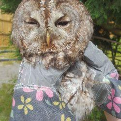 Prayer for poor little owl