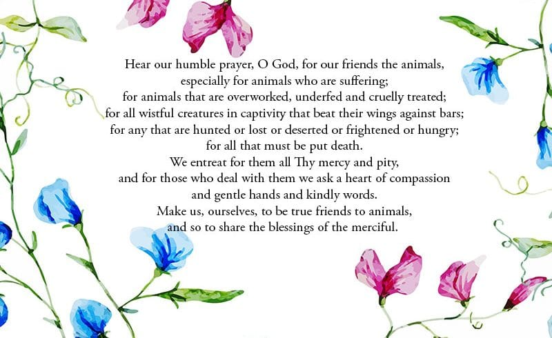 Prayer for Animals – Poem for Sunday