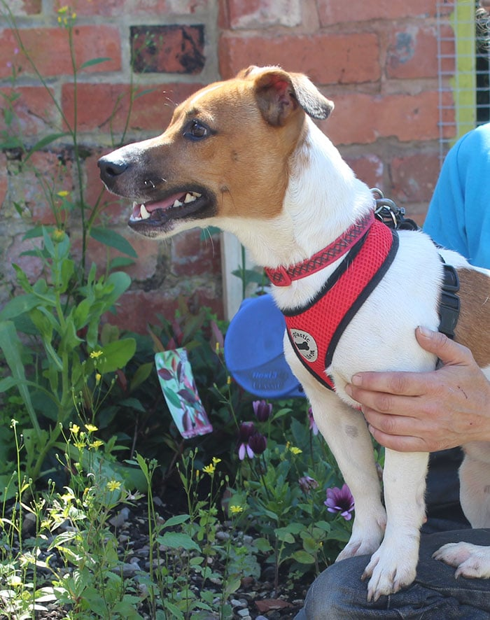 Bolt – Rehomed