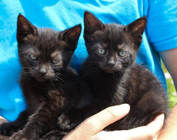 Gigabyte and Abit Kittens – Rehomed