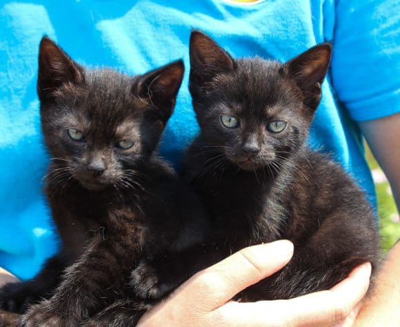 Gigabyte and Abit Kittens – Rehomed