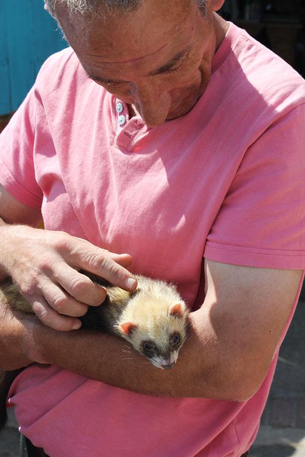 Slinky Ferret for Adoption