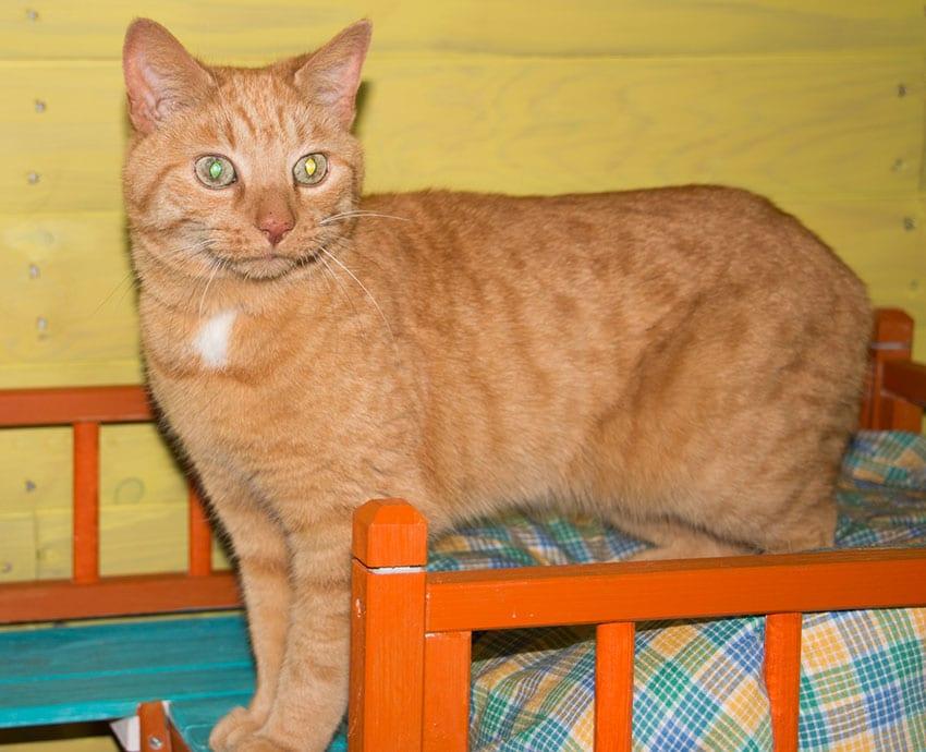 Monty Cat for Adoption