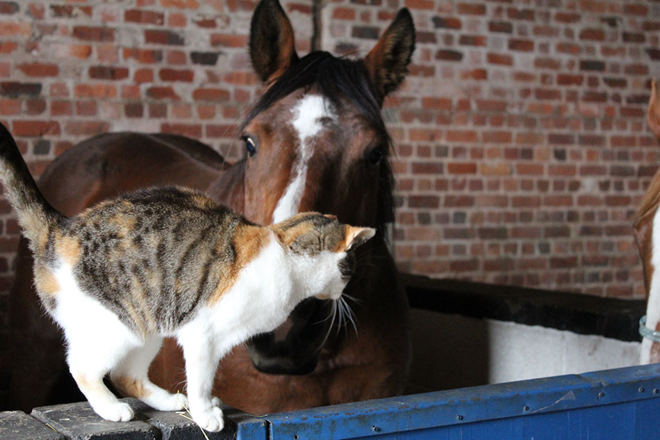horses with cat at sanctuary