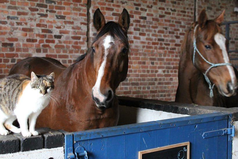 Elderly Champion Racehorse safe at the Sanctuary