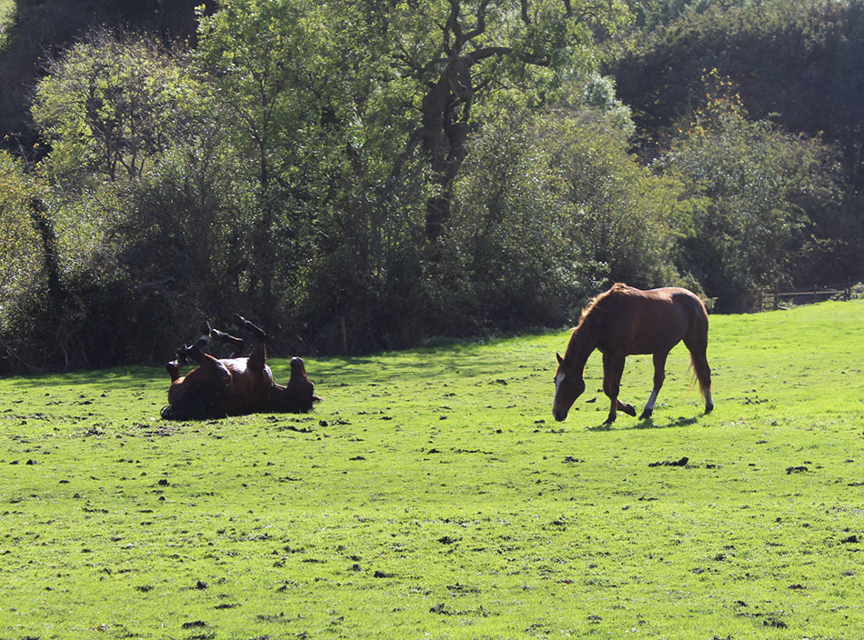 oscar and fidilin horses