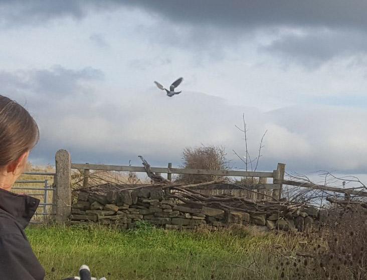Happy pigeon flying free