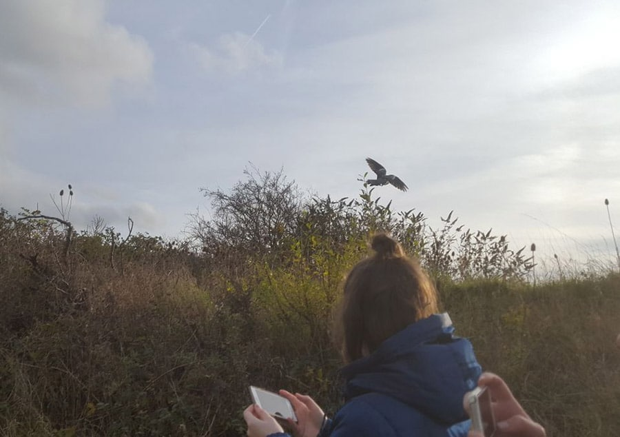 Pigeons back to health and released back into the wild