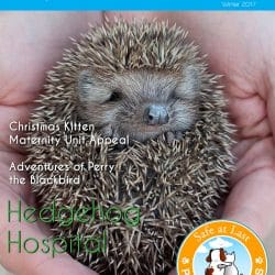 Safe at Last Magazine Available to Download