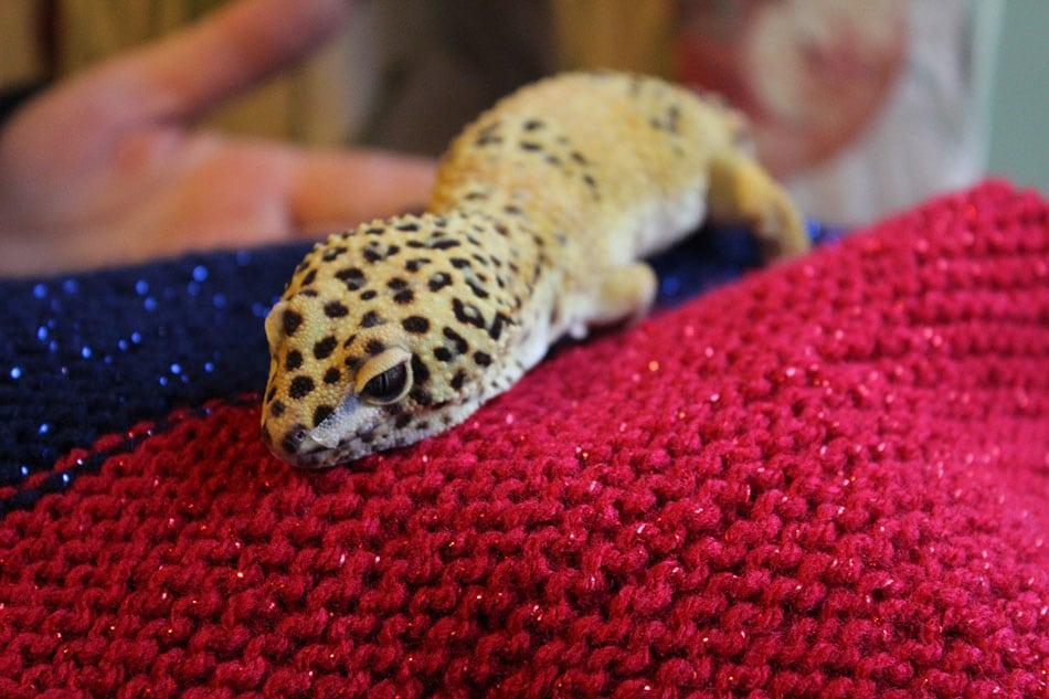 izzy gecko
