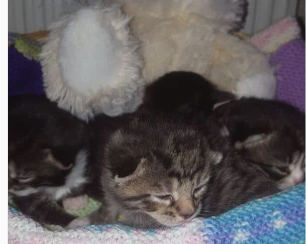 Spring Kittens available for adoption