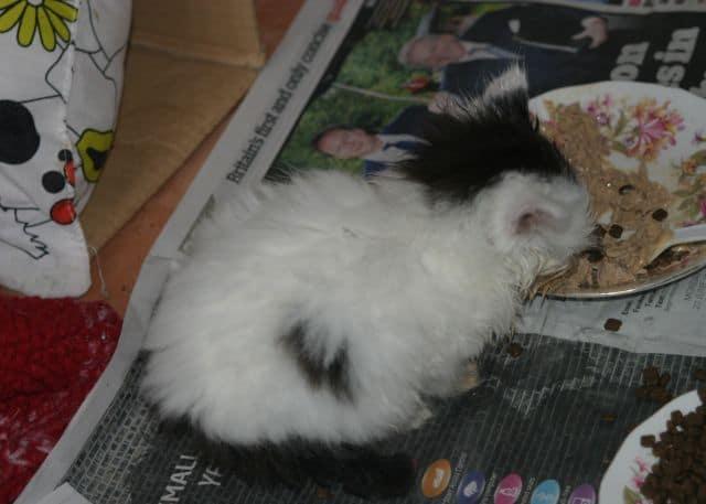 Orphan kitten hangs on