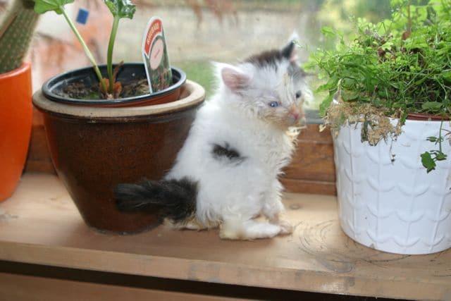 Little lost kitten