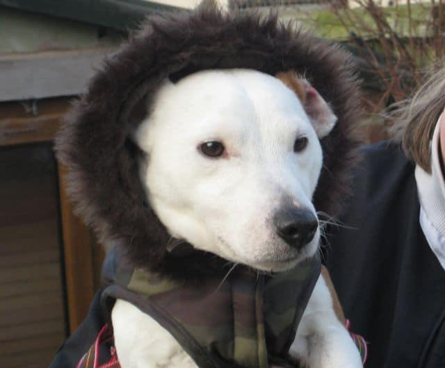 Louie wraps up warm