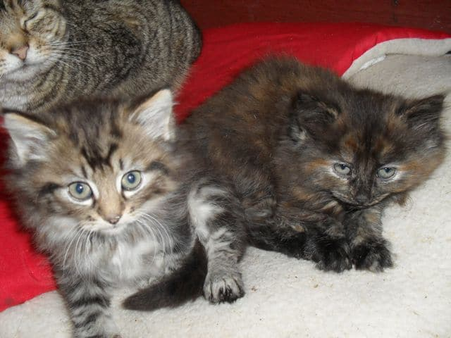Kittens are growing up fast