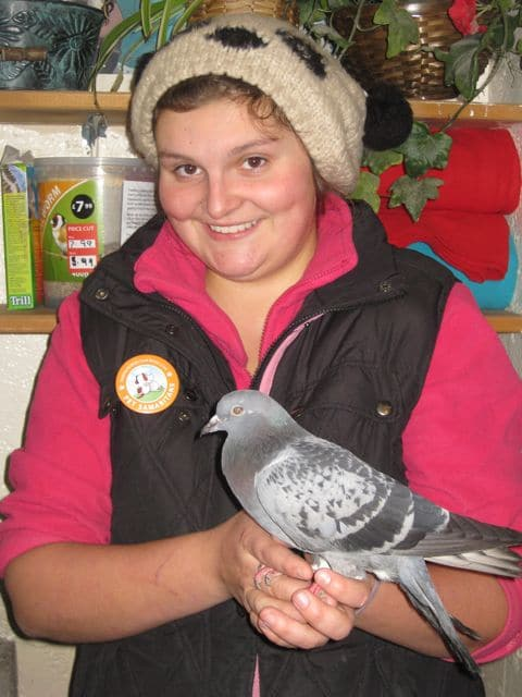Plucky pigeon is ready to fly - Pet Samaritans