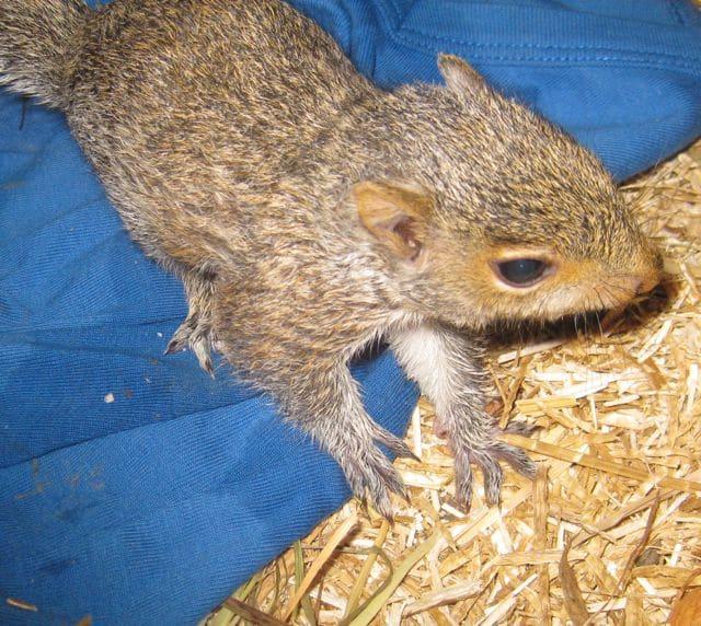 Sammy Squirrel is doing well