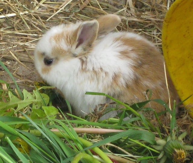 bunnies - two litters 4
