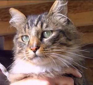 cats - tallulah beauty