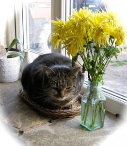 cats - tinkerbell mort