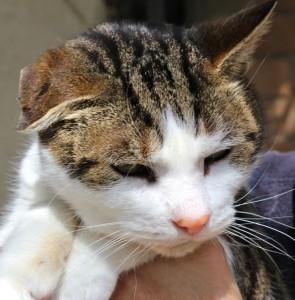 cats - mrtom 7