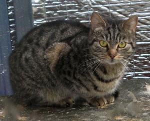 cats - zara 22