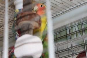 lovebirds 2